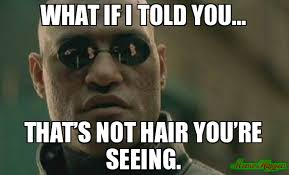 What If I Told You Meme - what if i told you that s not hair you re seeing meme scumbag