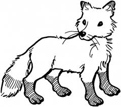 arctic fox coloring page with regard to encourage in coloring page