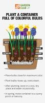 Fragrant Plants For Pots - layer bulbs in pots now for a spring full of blooms garden club