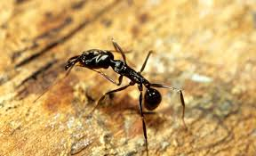 Very Small Ants In Bathroom Ants In Your Pantry Readers Offer Solutions To Stop The Invasions