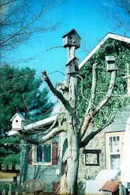 ls that look like trees 19 best dead tree ideas images on pinterest garden art home ideas