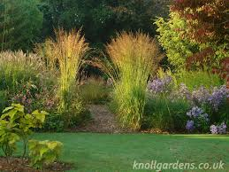 magnificent moor grasses knoll gardens ornamental grasses and