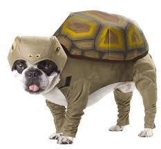 Pet Halloween Costumes Dogs 117 Dog Halloween Costumes Images Dog