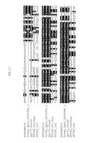 patent us20030198976 novel human g protein coupled receptor