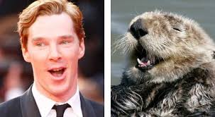 Cumberbatch Otter Meme - benedict cumberbatch looks like an otter pictures