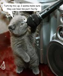 singing cat memes quickmeme