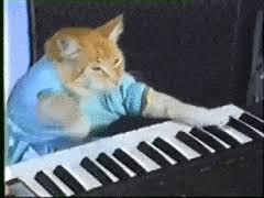 keyboard cat gifs search find make share gfycat gifs
