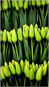 169 best flowers u0026 plants flores y plantas images on pinterest