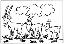 coloring amusing coloring pages goat cute sheets kids