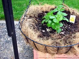 going green gardening ideas gardening