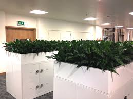 indoor plants for offices urban planters
