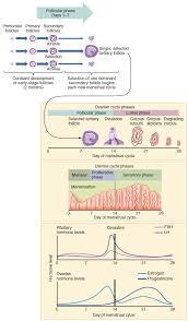 Anatomy Of Female Reproductive System 27 2 Anatomy And Physiology Of The Female Reproductive System