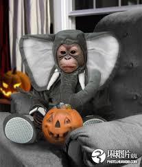 Halloween Costumes Elephant Dog Costume Elephant 17 Pets Funnier
