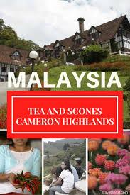 malaysia cameron highlands tea and scones travel2next