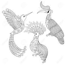 coloring page with bird rhinoceros hummingbird and exotic bird