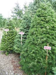 227 best christmas tree farm images on pinterest christmas tree