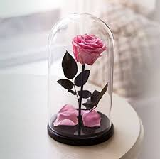 rose in glass amazon com beauty and the beast rose live forever rose in glass