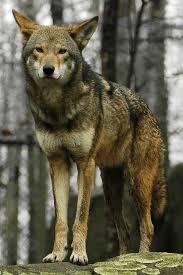 North Carolina wild animals images Animal adaptations jpg