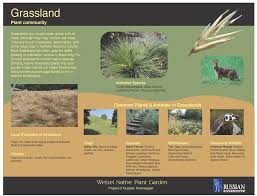native northern california plants wetzel native plant garden russian riverkeeper