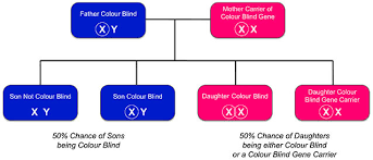 Book Of Eli Blind Or Not Inherited Colour Vision Deficiency U2014 Colour Blind Awareness
