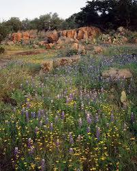 native plants in texas inks lake state park nature u2014 texas parks u0026 wildlife department