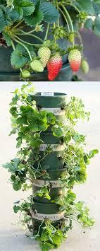 idee fai da te per il giardino 9 idee fai da te creative fai da te per il giardino soft sajt