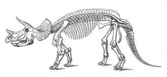 triceratops skeleton reconstruction sketch