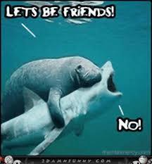 Manatee Meme - funny manatee funny manatee memes paige pinterest manatee
