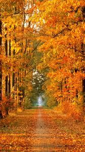 imagenes de otoño para fondo de escritorio otoño fondos de pantalla para android e iphone fondos otoño movil