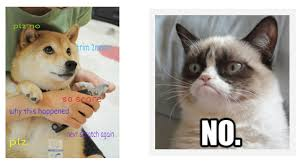 Success Cat Meme - we really meme it how memes can add a layer of fun to your rescue