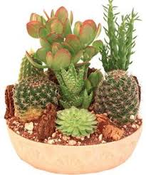 mini jardin de cactus jardin pinterest cacti gardens and