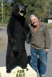 How Much Does A Bear Rug Cost Mac U0027s Taxidermy Mooseheads For Sale Taxidermy For Sale