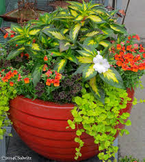 Foliage Flower - designing gardens with fine foliage