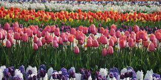 Flower Wholesale Retail Specialist Ruigrok Flowerbulbs