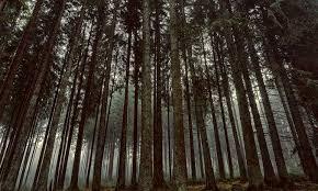 si e onu uno slovacco è il nuovo capo forum onu sulle foreste