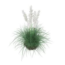 3d ornamental grass cgtrader