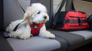 Sleepypod Mobile Pet Bed Pet Travel Is Safer With Sleepypod Fido Friendly