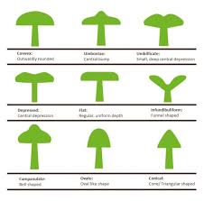 Types Of Garden Fungus - a guide to poisonous u0026 edible mushrooms love the garden