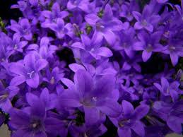 Flowers By Violet - violet flowers by kasia240 deviantart com on deviantart scenery