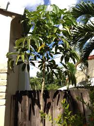 native plants of south florida identification what is this south florida tree gardening