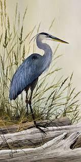 blue heron drawing google search herons paintings photos