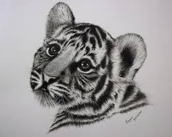 charcoal pencil drawing cute cub hi friends this is a u2026 flickr