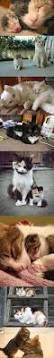Katze Schlafzimmer Ja Bett Nein Die Besten 25 Katzenliebhaber Ideen Auf Pinterest Katzen Zitate