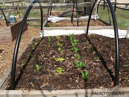 tales of a transplanted gardener may 2010