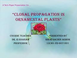 propagation in ornamental plants