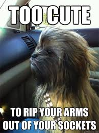 Chewbacca Memes - too cute to rip your arms out of your sockets cute chewbacca