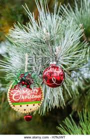 frosted pine tree stock photos frosted pine tree stock images