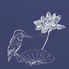 kingfisher and lotus with sketch drawing royalty free stock photos
