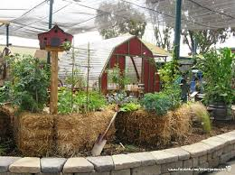 67 best straw bale gardening images on pinterest strawbale