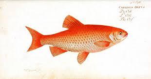 animal u2013 fish 2 vintage printable swivelchair media u2013 beta